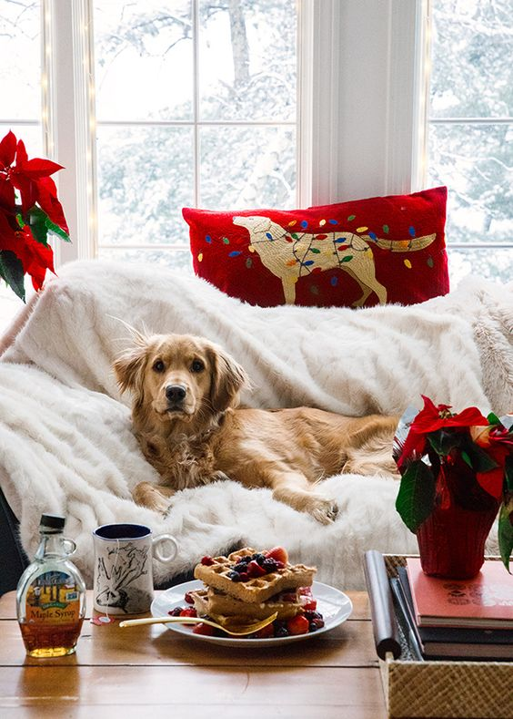 Aesthetic Christmas pictures with Golden Retriever dog and waffles