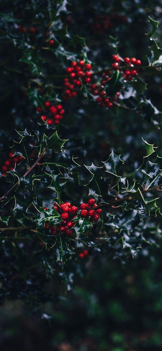 Mistletoe wallpaper iPhone