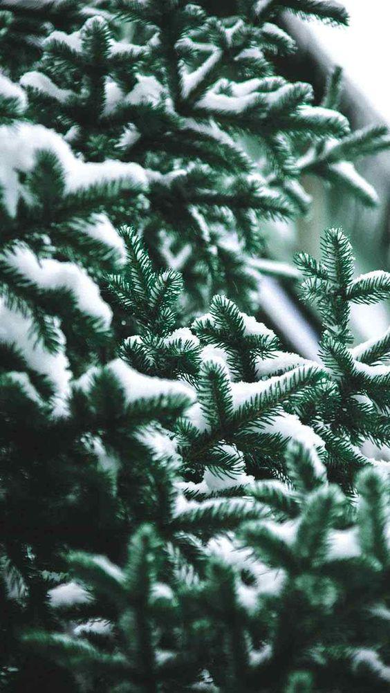 Green Christmas tree wallpaper iPhone