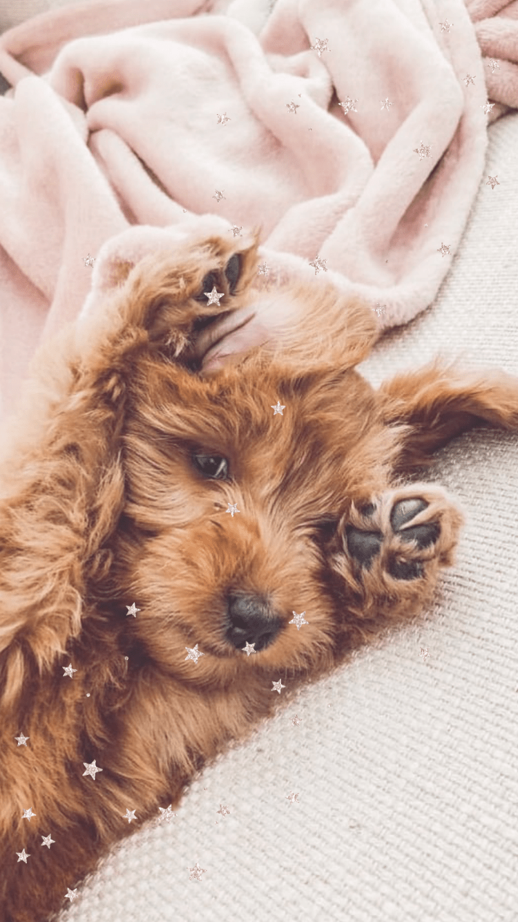 cute puppy wallpapers, cute wallpapers, cute pictures, cute iPhone wallpaper