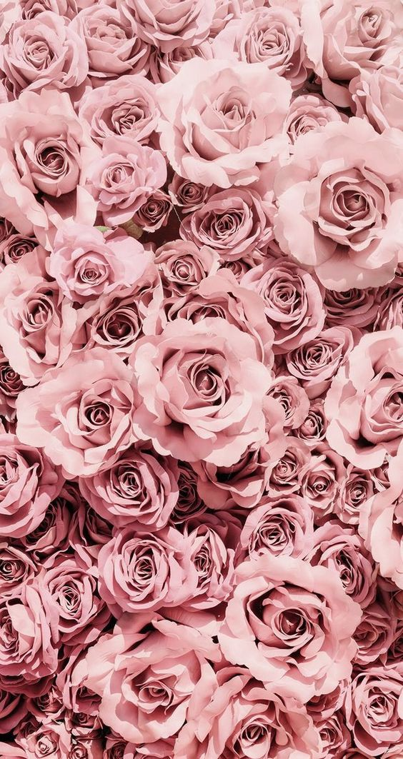 pretty backgrounds, pretty wallpapers iphone, roses wallpaper, flower wallpaper