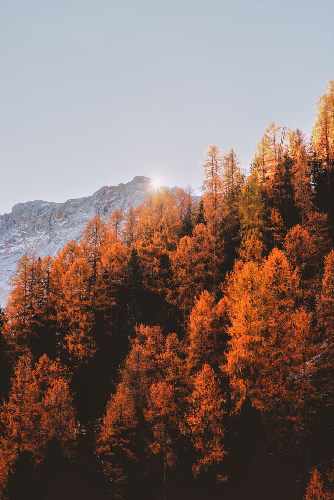 Beautiful nature wallpapers for iPhone with fall forest and foliage, fall wallpapers