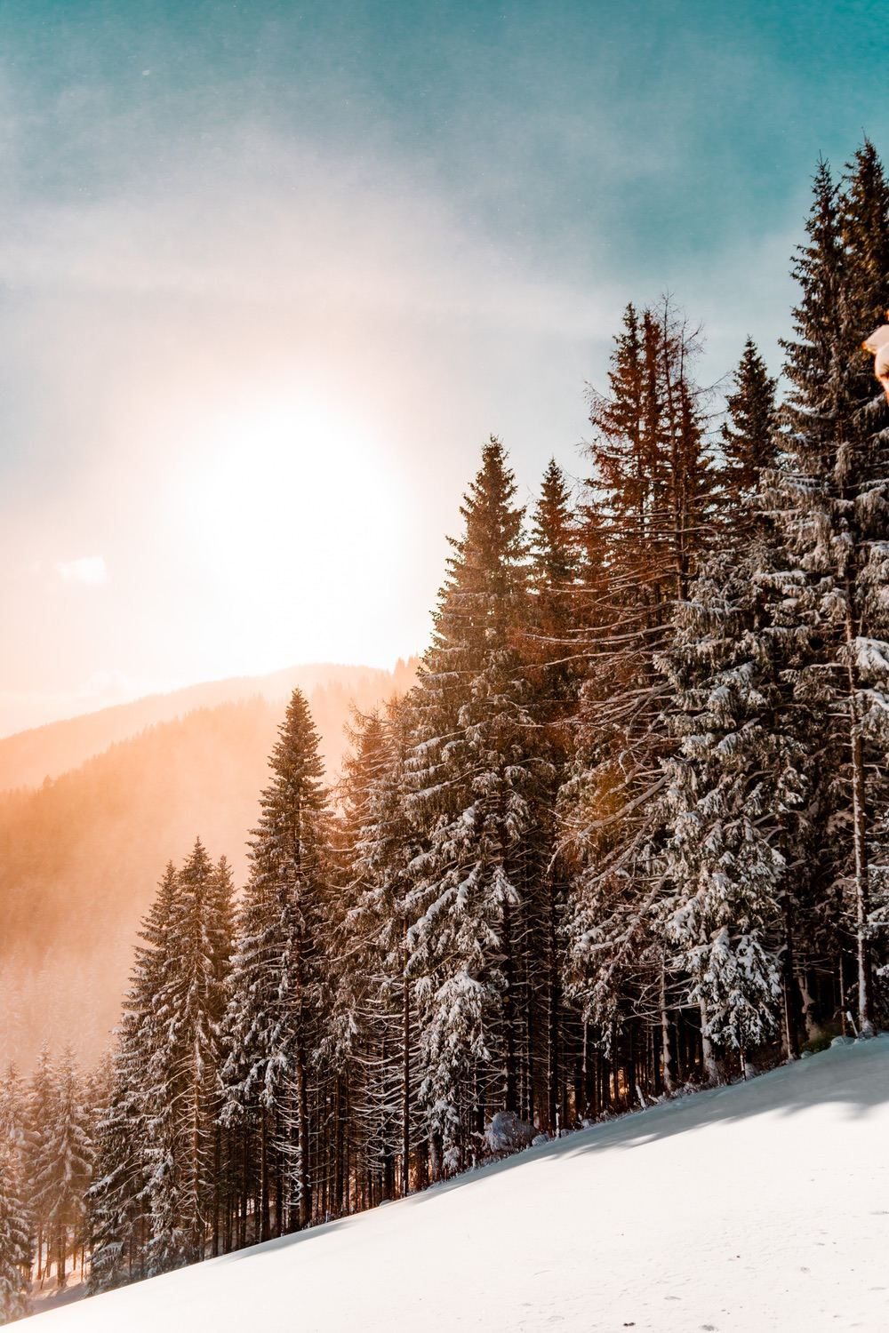 Beautiful nature wallpapers for iPhone - snowy forest wallpaper