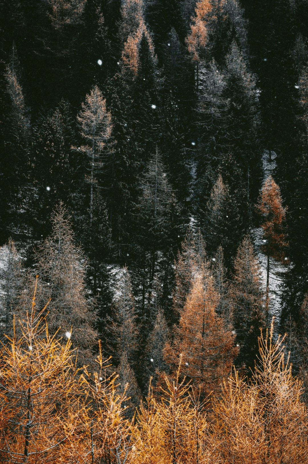 Fall wallpaper with forest - beautiful nature wallpapers for iPhone