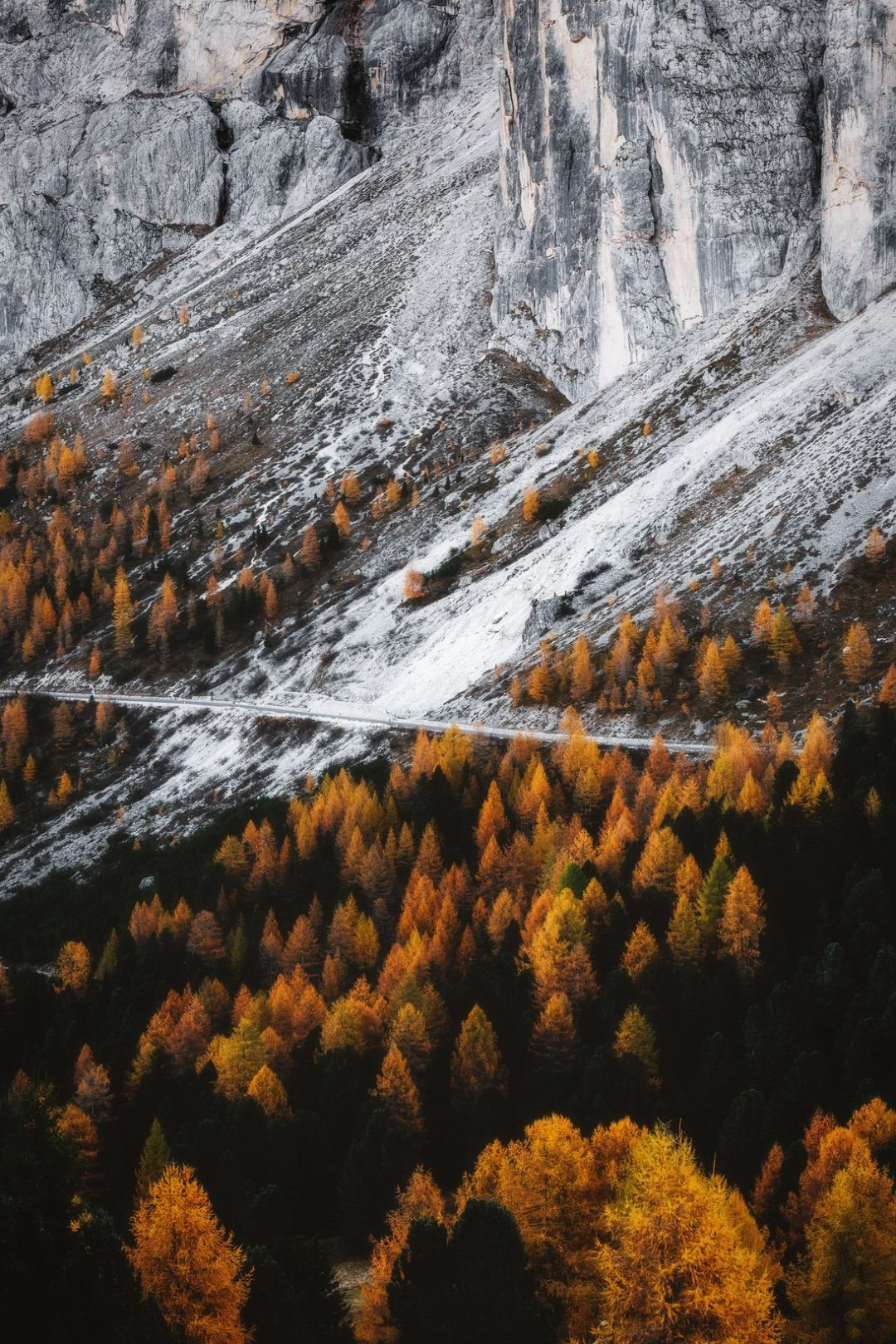 Beautiful nature wallpapers for iPhone with fall forest
