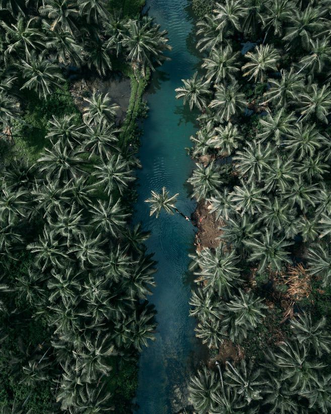 Beautiful nature wallpapers for iPhone with palm trees