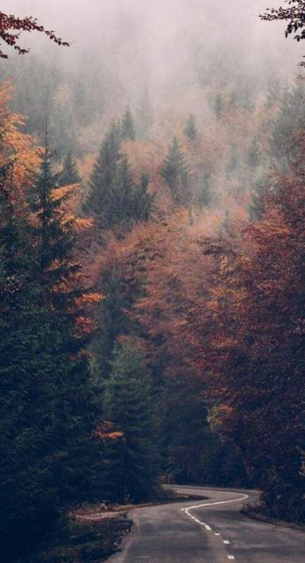 Beautiful nature wallpapers for iPhone - fall forest wallpapers