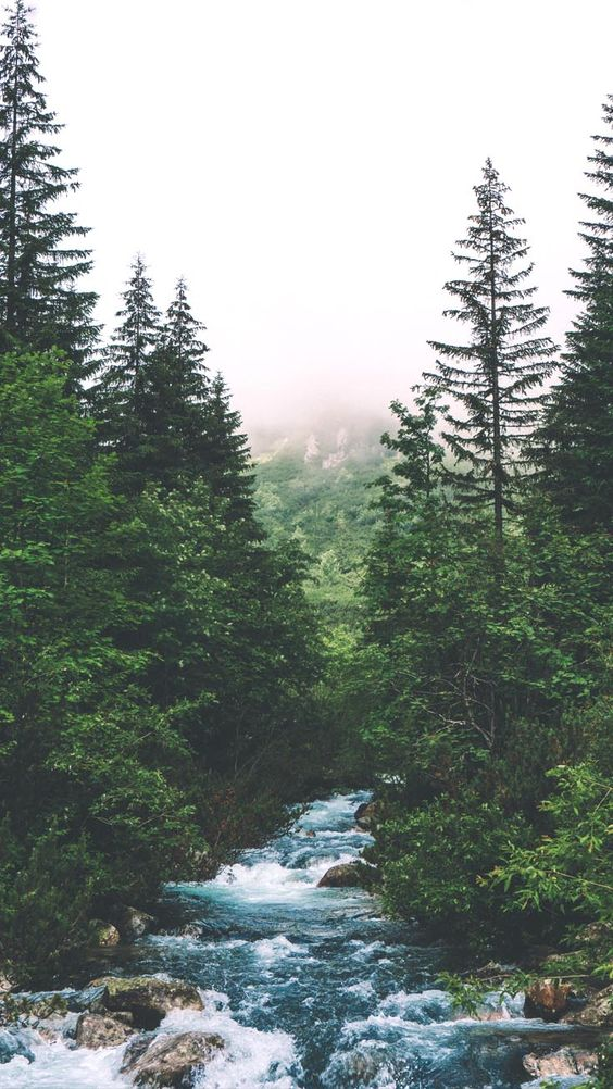 Beautiful nature wallpapers for iPhone - forest wallpapers with water