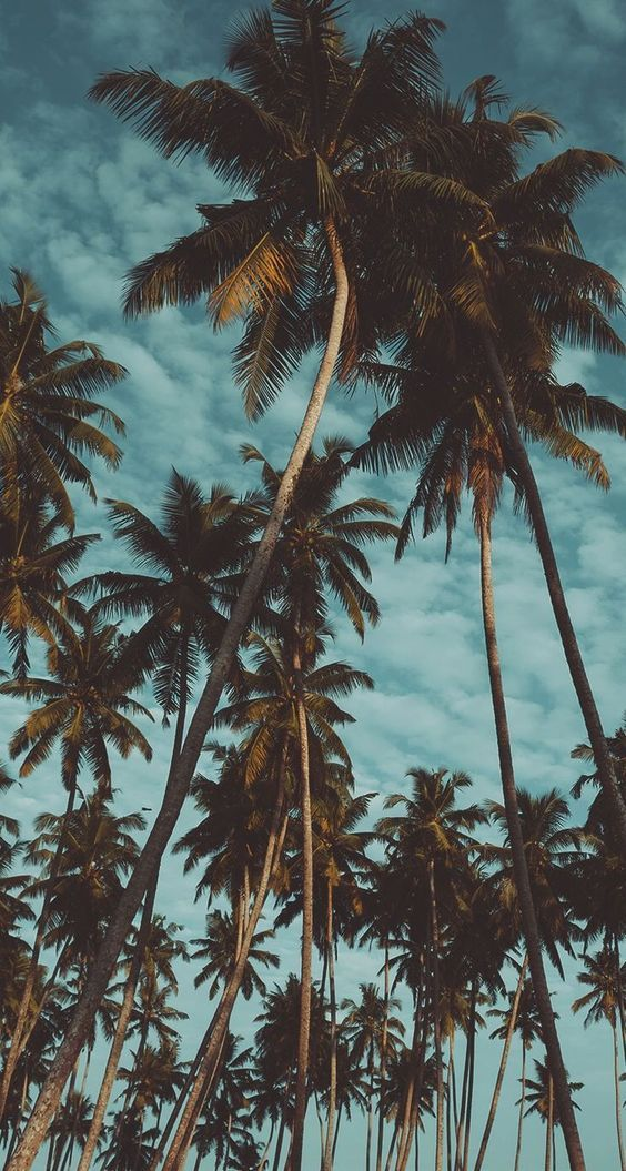 Palm tree iPhone wallpapers with clouds