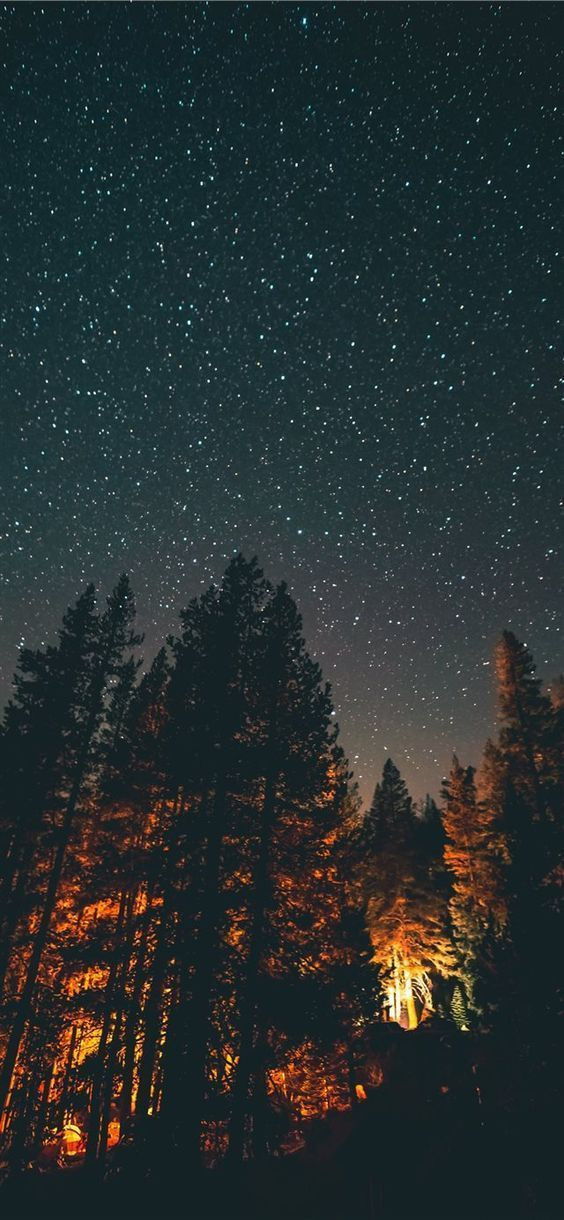 Beautiful nature wallpapers for iPhone - dark night sky wallpaper with forest