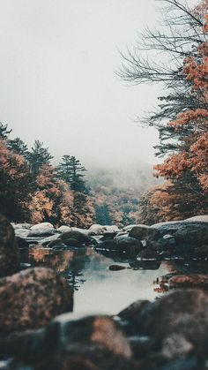 Beautiful nature wallpapers for iPhone - fall forest wallpaper with water