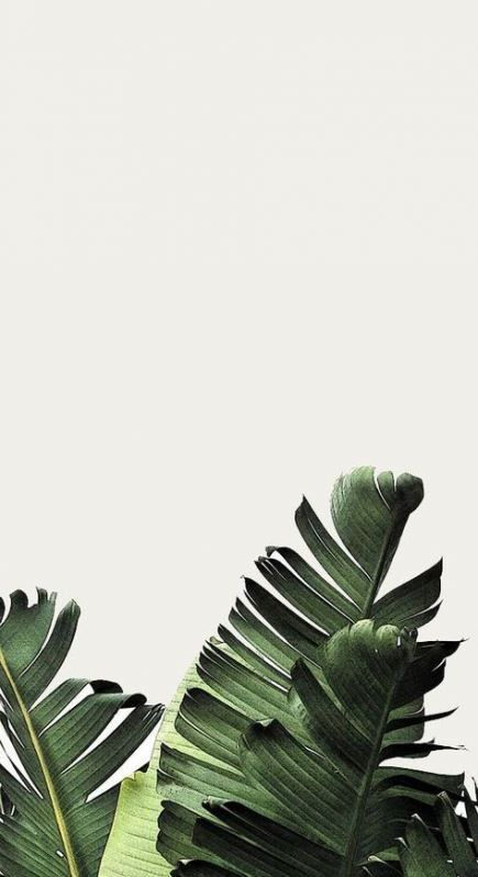 Green plant wallpaper for iPhone, plant leaf wallpaper
