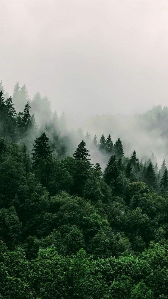 Beautiful nature wallpapers for iPhone - forest wallpapers