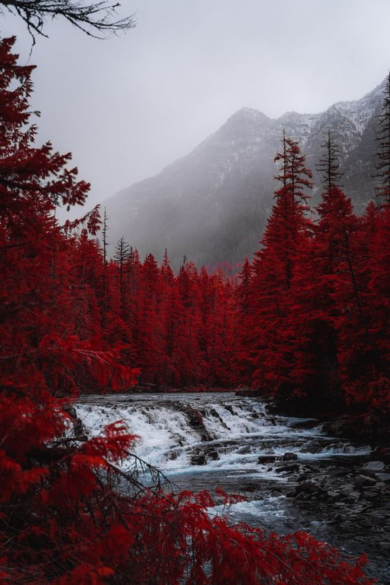Beautiful nature wallpapers for iPhone - fall forest wallpaper with red trees, mountains and river