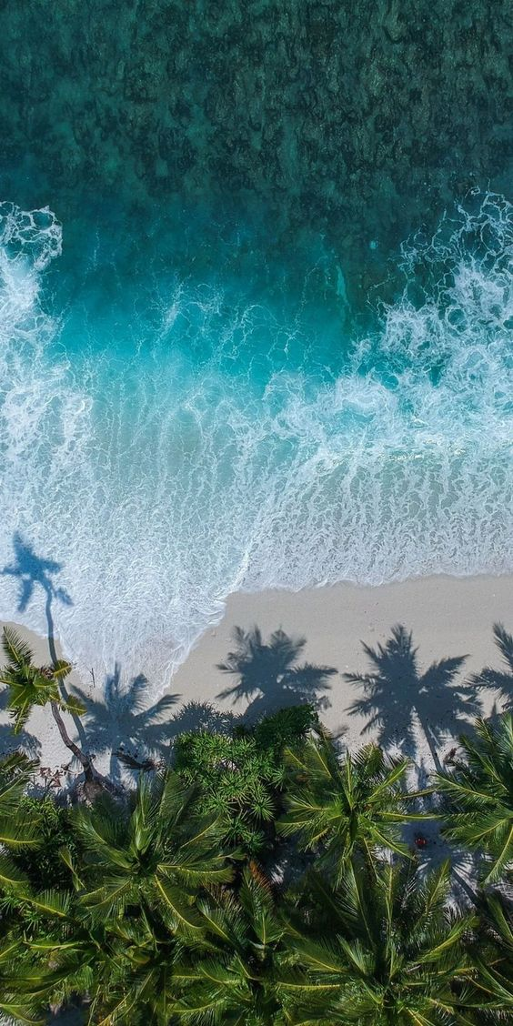 Beach wallpaper with ocean and palm trees