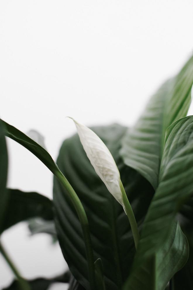 Plants wallpaper and leaf wallpaper