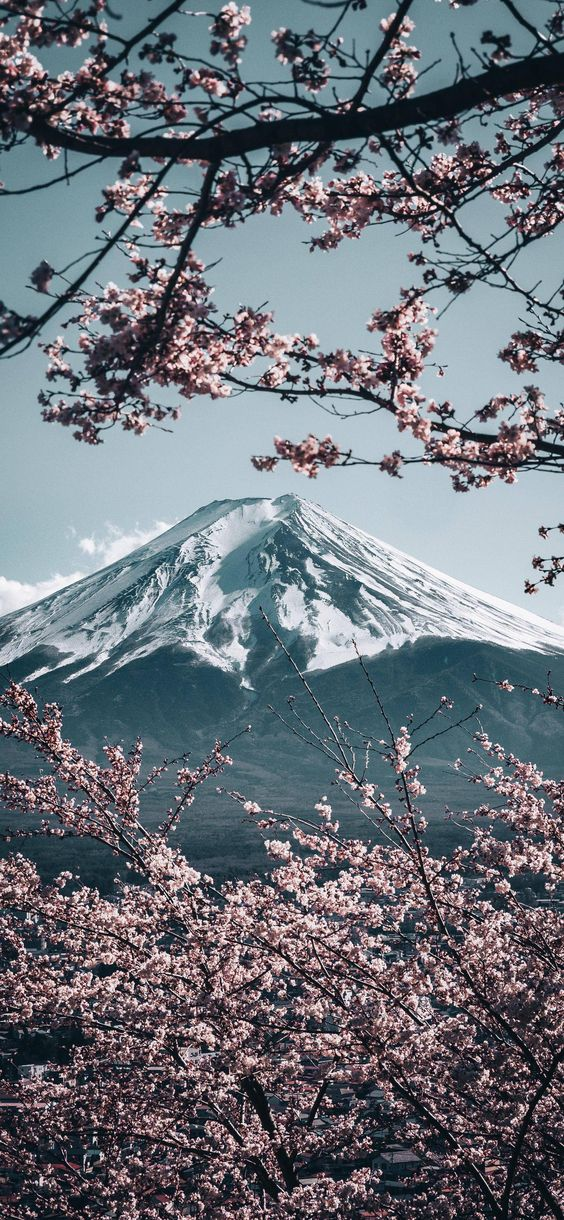 Fuji mountain wallpaper iPhone, iphone mountain wallpaper with cherry blossoms