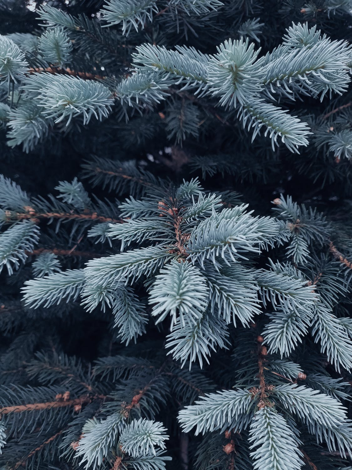 Christmas tree aesthetic wallpaper for iphone