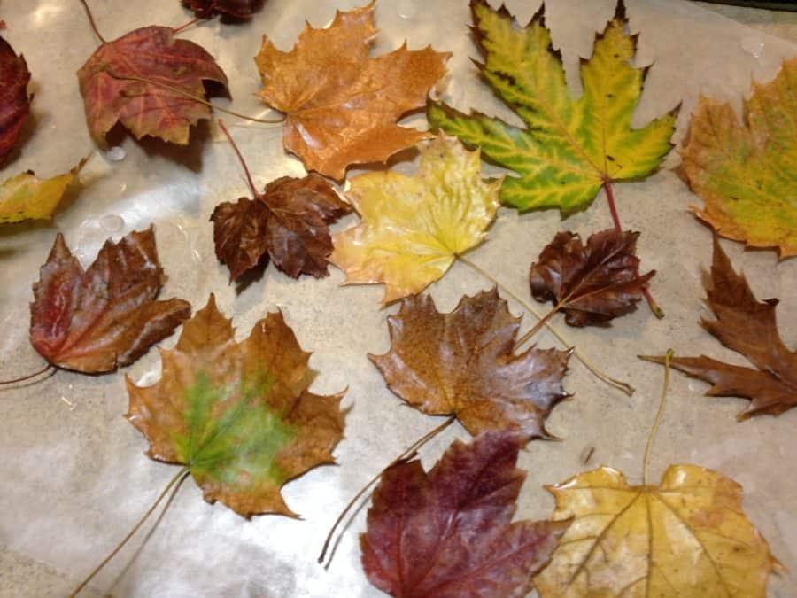 DIY Waxed Fall LeavesThanksgiving decor ideas