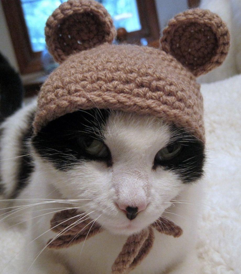Teddy bear cat costume for Halloween
