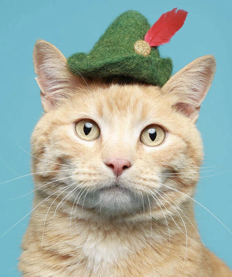 Robin Hood cat costume for Halloween