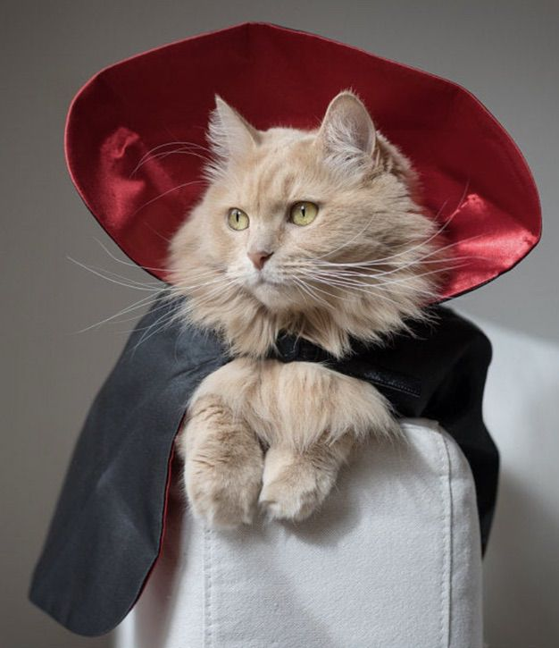 Dracula cat costume for Halloween