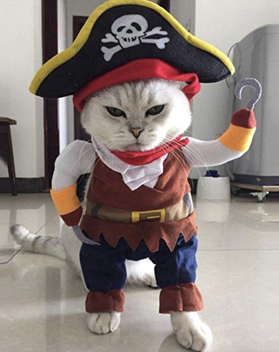 Cute Pirate cat costumes for Halloween