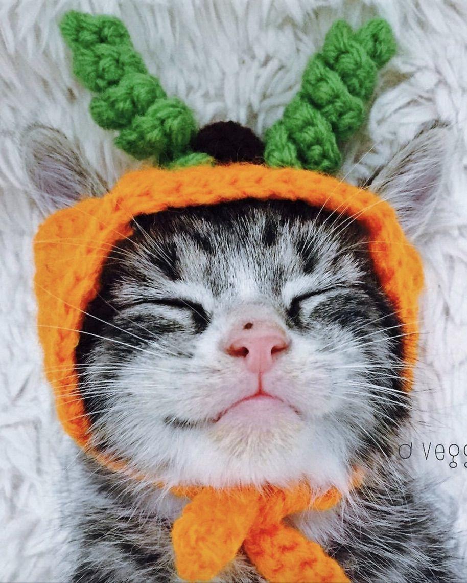 Cute pumpkin cat costumes for Halloween