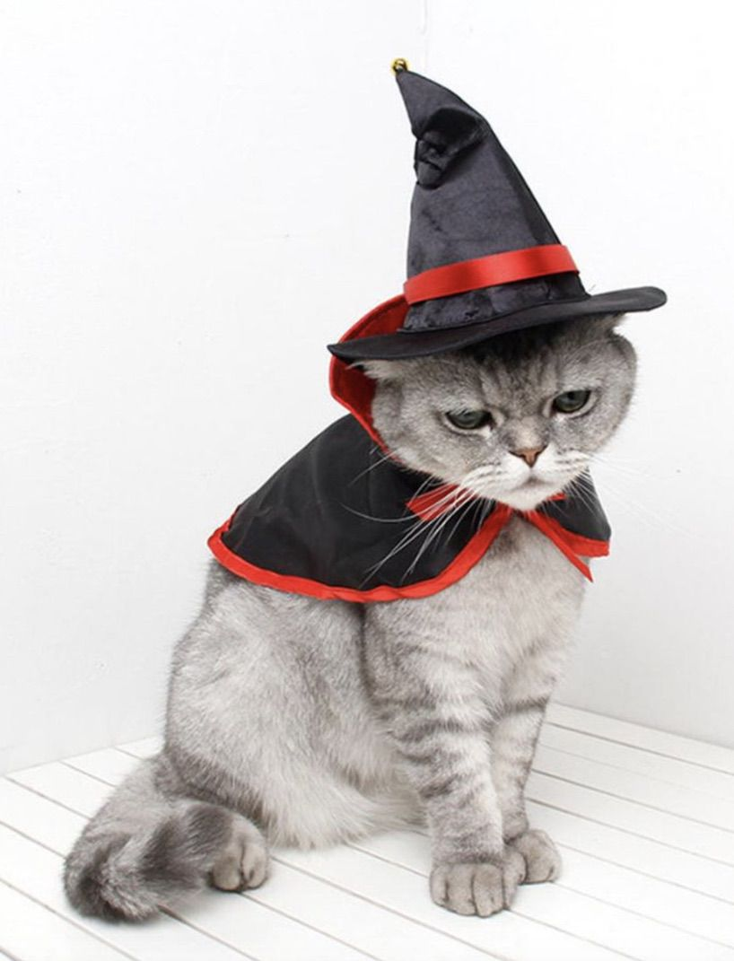Witch cat costumes for Halloween