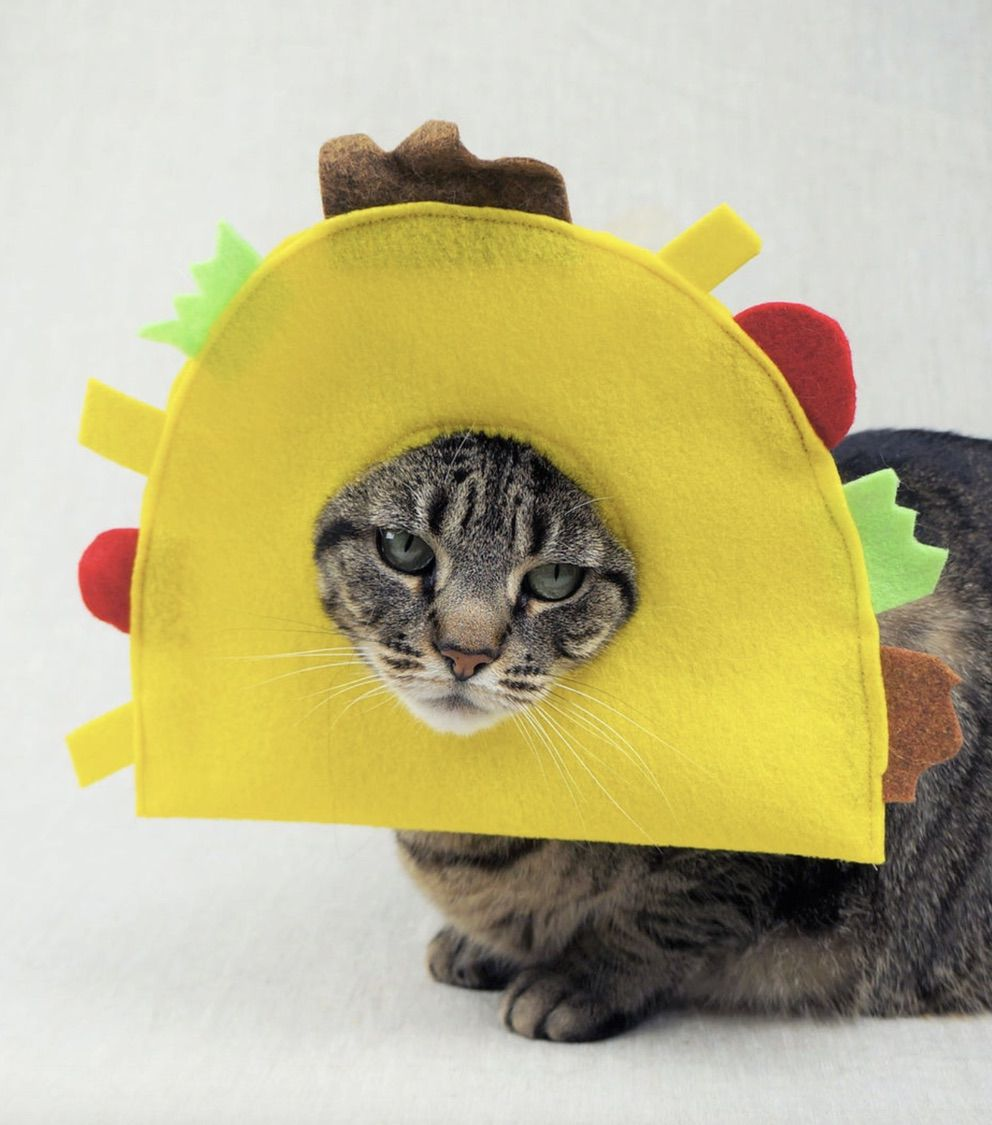 Taco cat costumes for Halloween