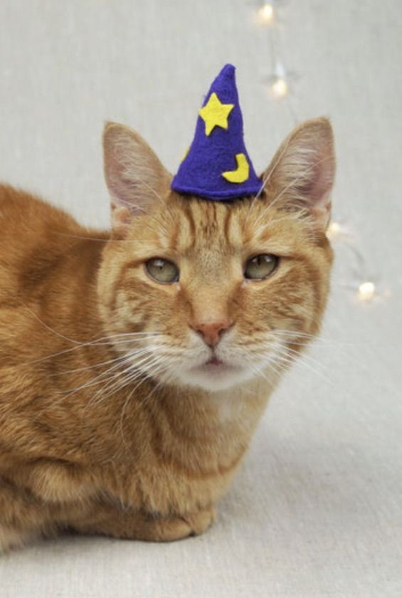 Cute wizard cat Halloween costumes, wizard cat costume