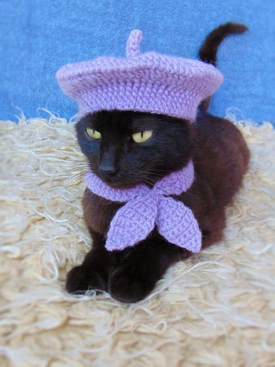 Purple French cat costume for Halloween