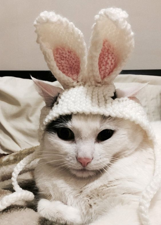 Cute bunny cat costume for Halloween