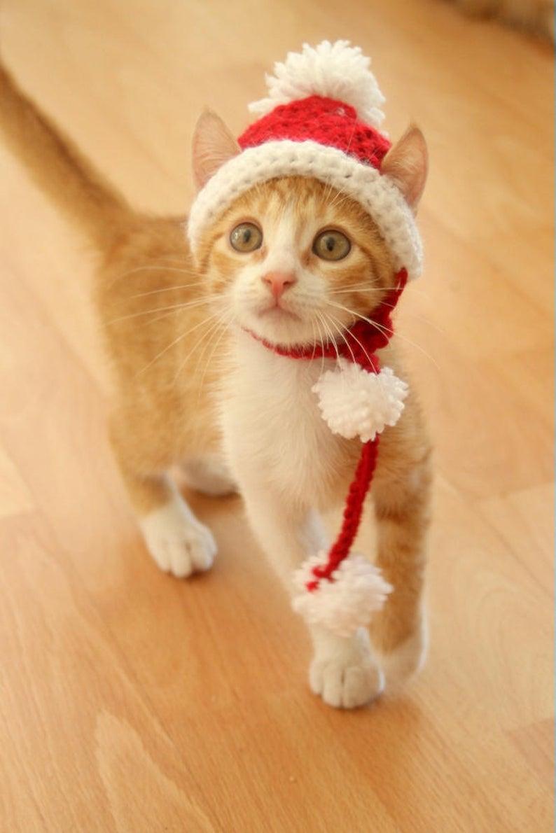 Cut Santa cat costumes