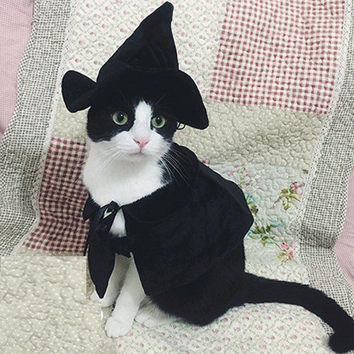 Cute Black Cat Witch Halloween Costume For Cats
