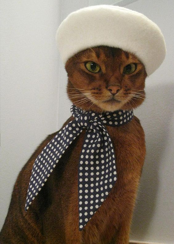 Stylish French cat costumes for Halloween