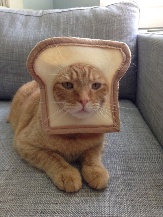 Cute toast cat costumes for Halloween