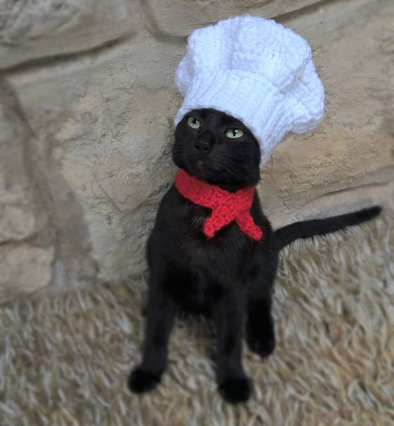 Cute chef cat costumes for Halloween