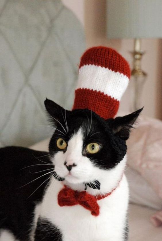 Cute Cat in the Hat cat costume for Halloween