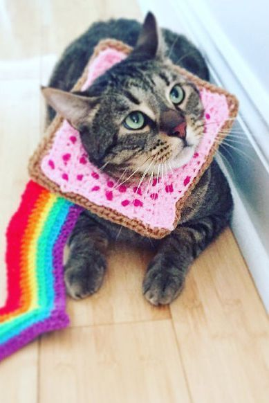 Nyan cat costume for cats