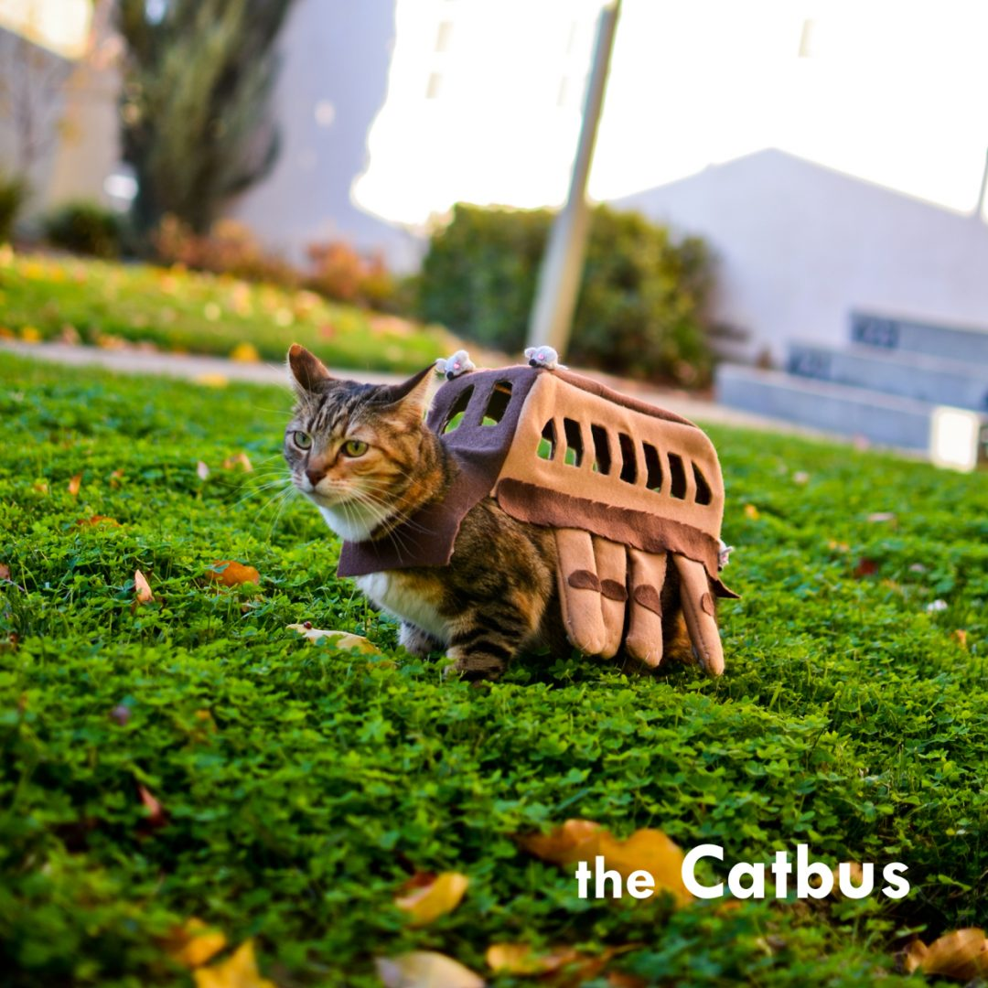 Catbus costume for cats