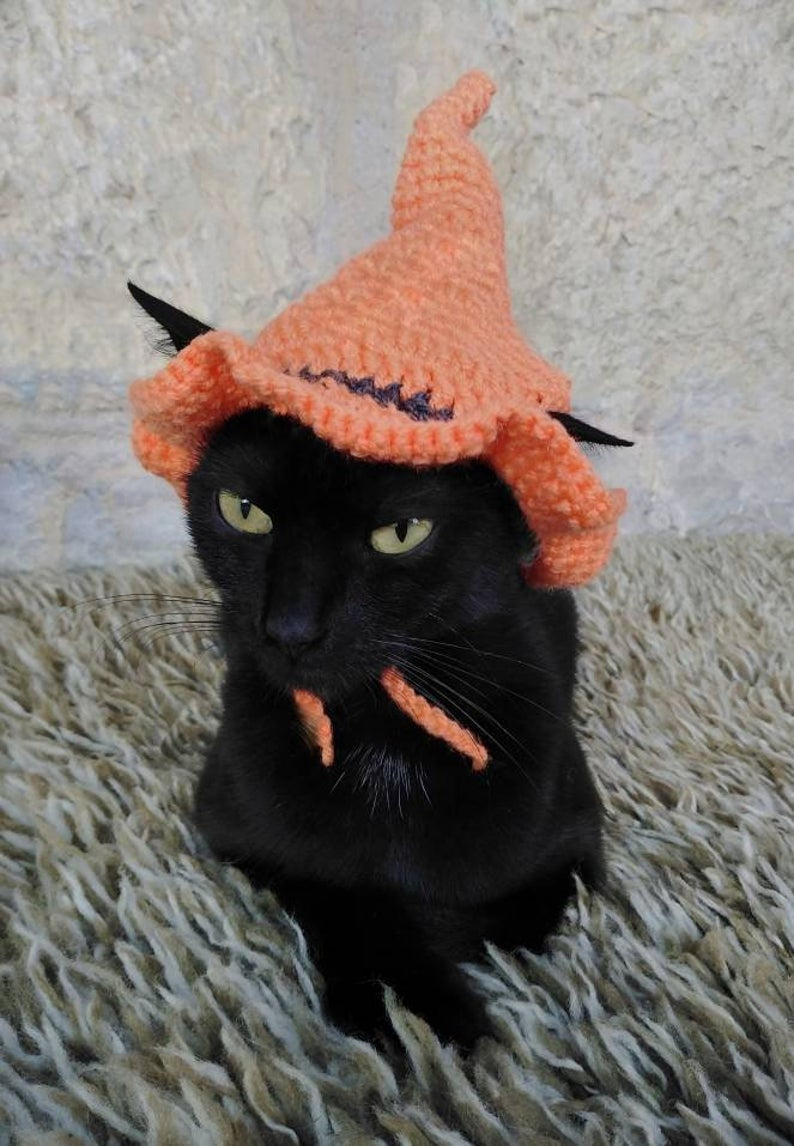 Orange witch hat cat Halloween costume