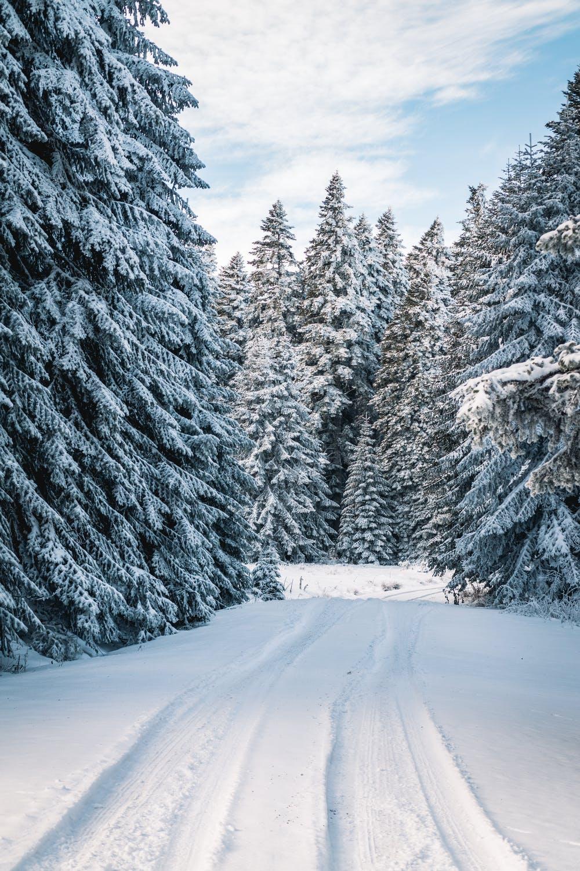 Snowy winter forest wallpaper