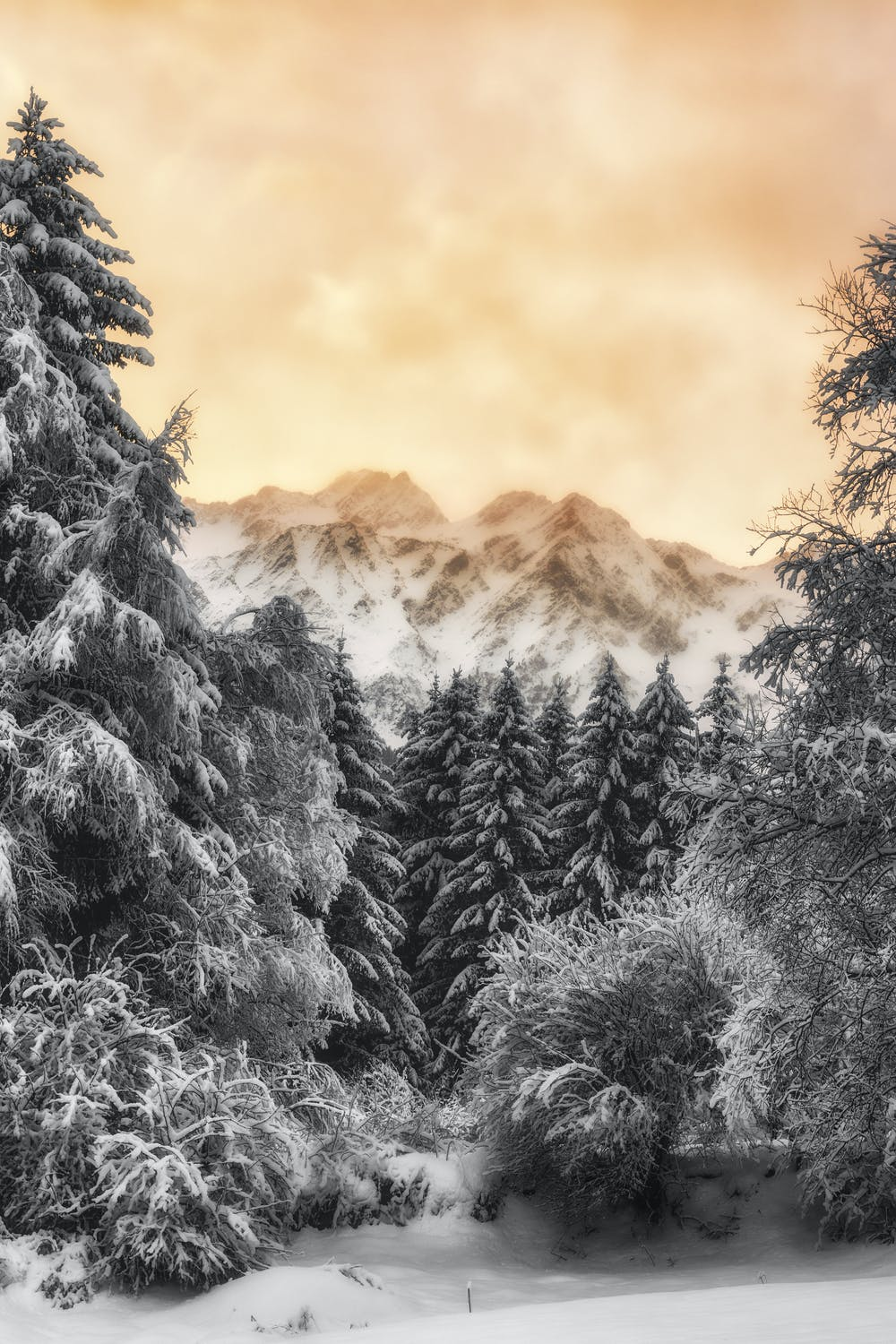 Beautiful winter wallpapers for iphone with yellow sky and forest