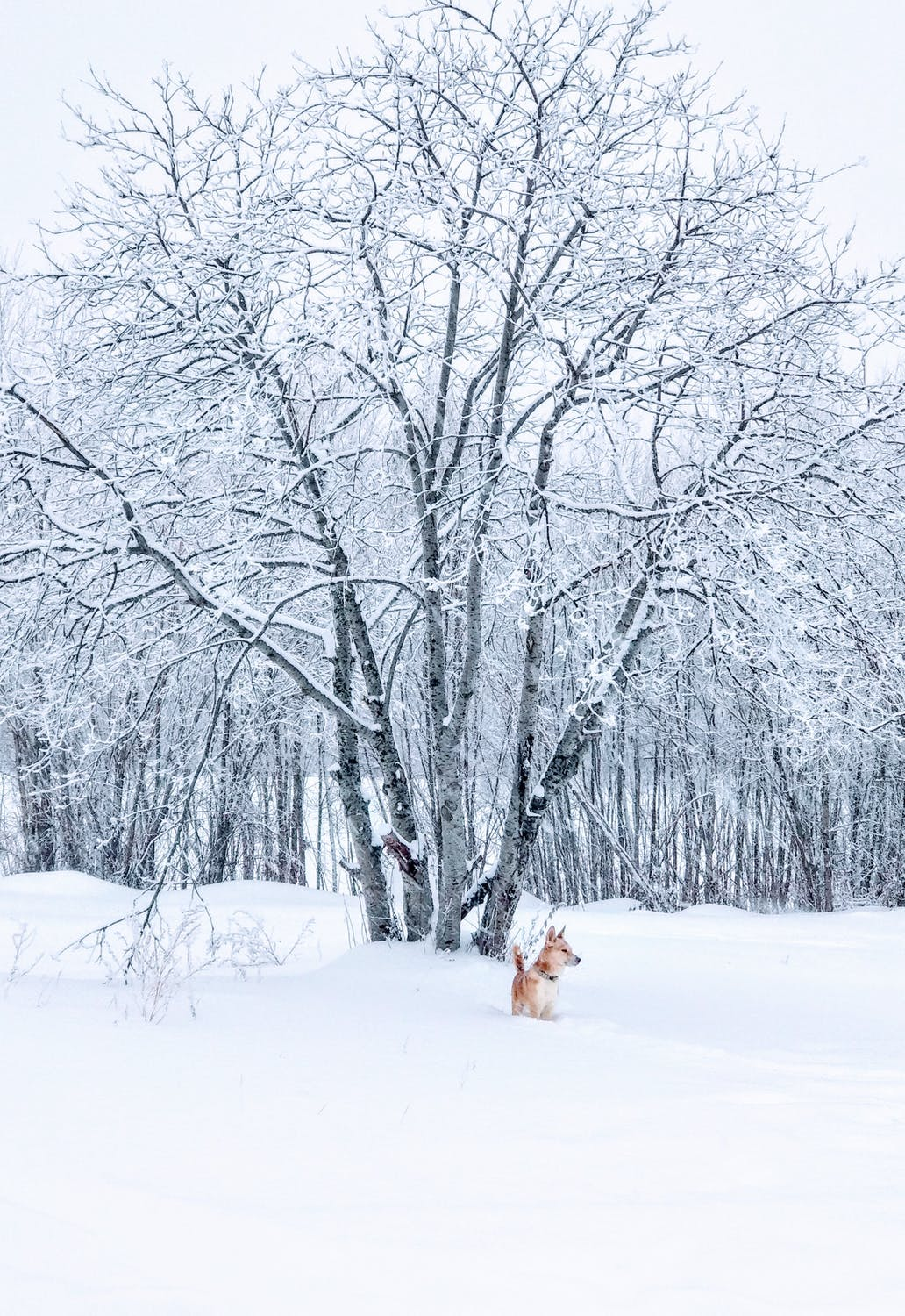 Winter wallpaper with snow, snow wallpaper with dog