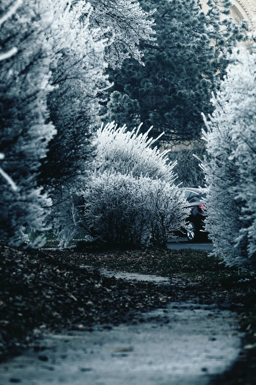 Winter wallpaper with trees