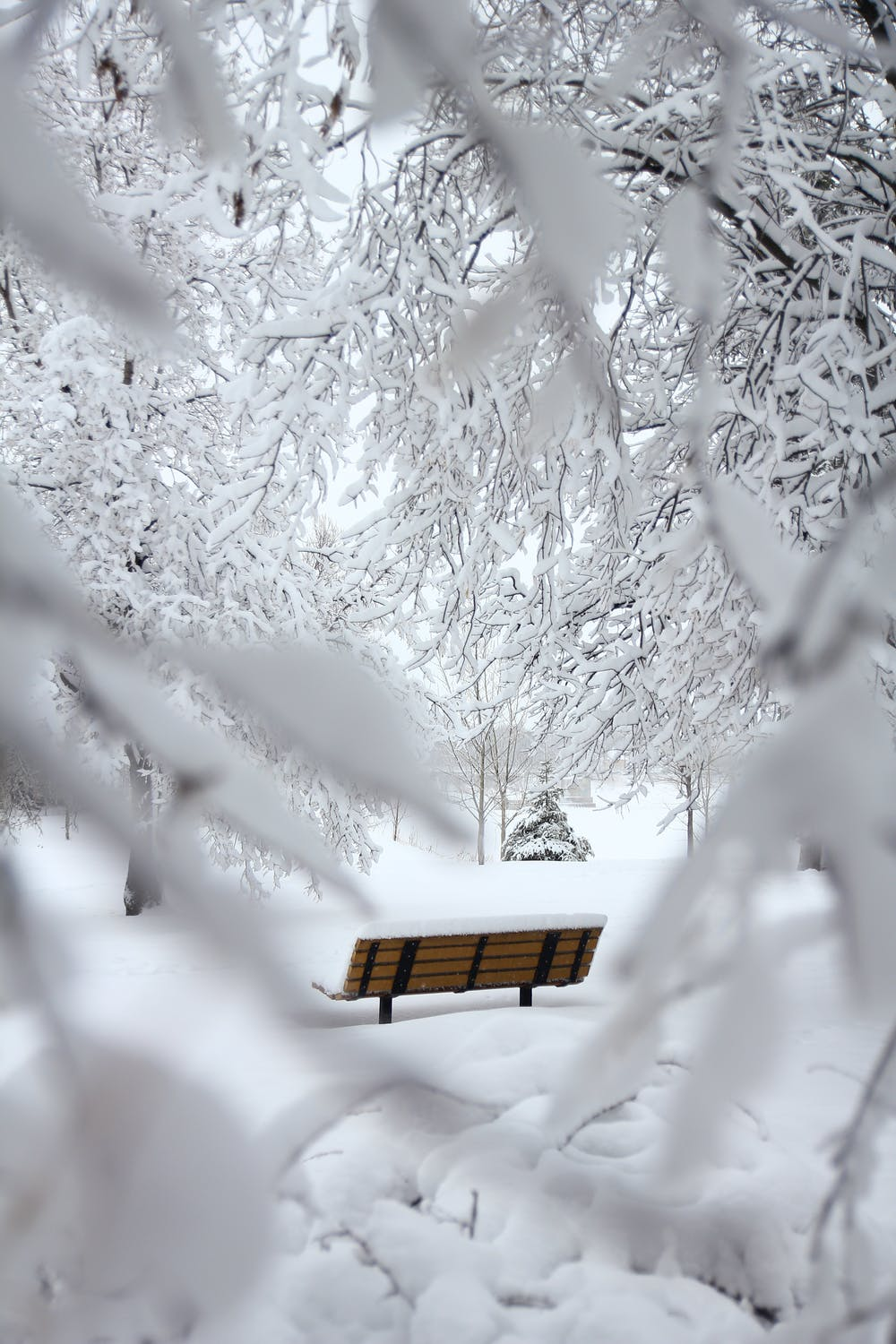 White winter wallpaper with snow and snowy trees
