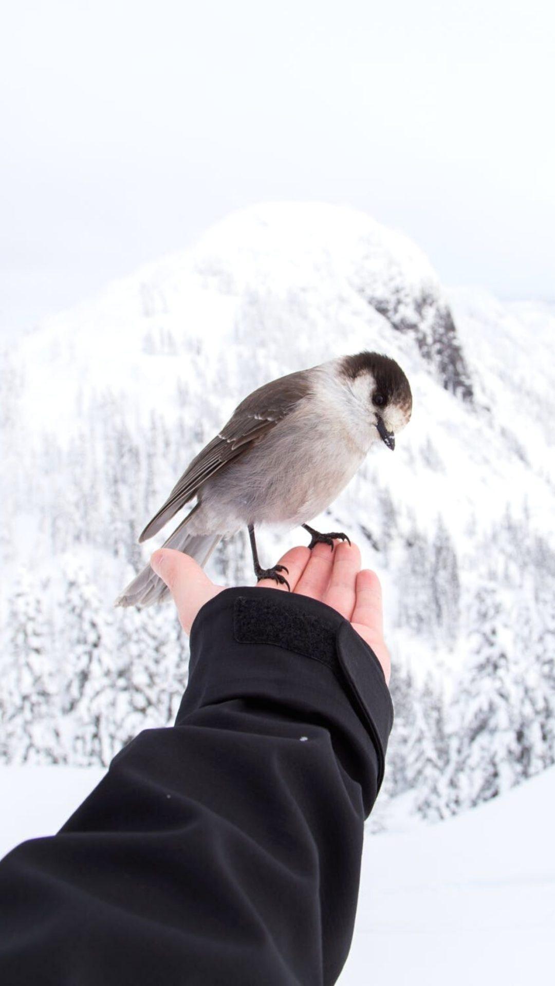 Beautiful Winter Wallpapers with animals (bird)