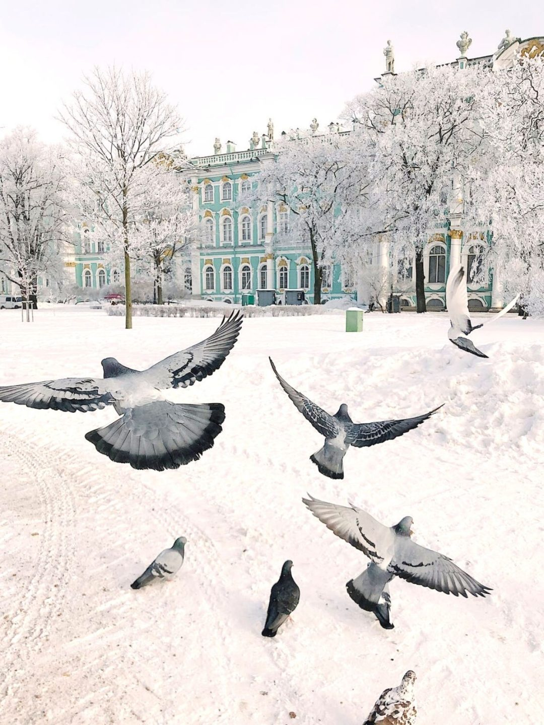 Winter wallpapers for iPhone with birds, snowy city wallpaper - Ermitage wallpaper
