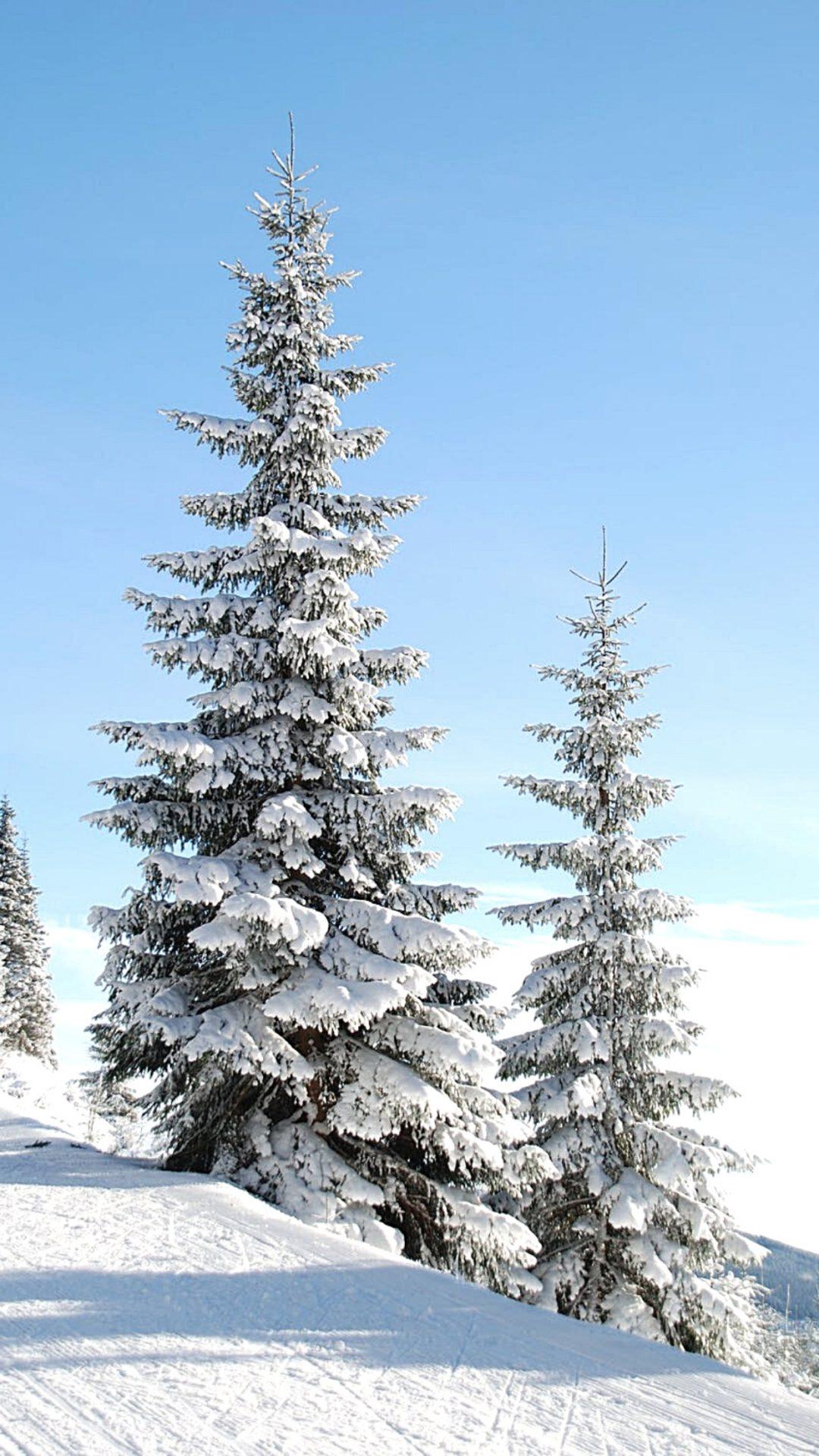 Winter forest iPhone wallpaper
